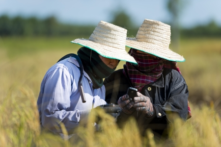 field of thai: farmers on rice field with cell phone
