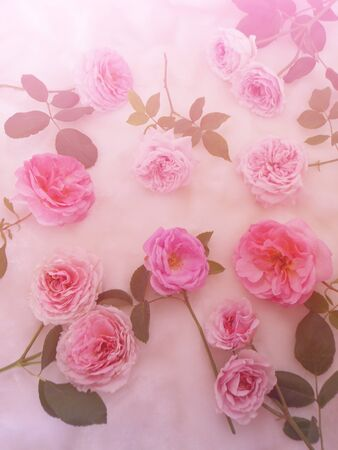 vintage background: Rose vintage background