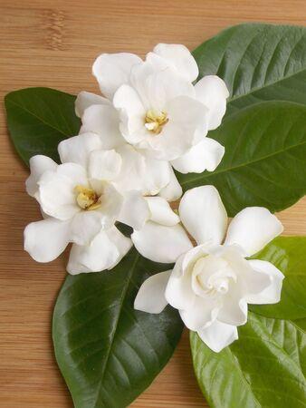 gardenia: Beautiful white gardenia flower Stock Photo