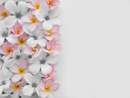 Beautiful plumeria flower background Stock Photo
