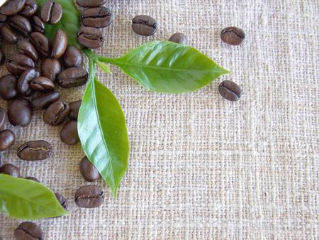 sackcloth: Coffee bean on sackcloth background