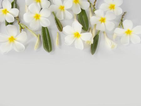 plumeria on a white background: Beautiful plumeria flower on white background Stock Photo