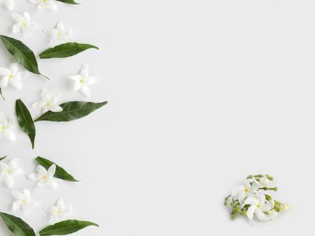 White gardenia flower on white background.