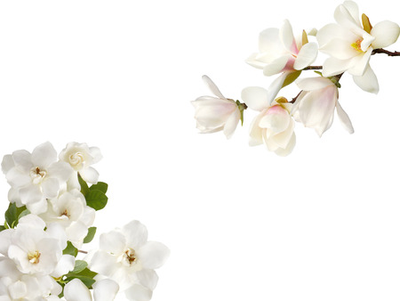 White magnolia and gardenia flower on white background stock photo stock photo white magnolia and gardenia flower on white background mightylinksfo