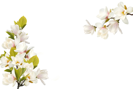 Magnolia flower bouquet isolated on white background.