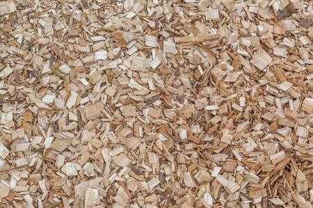 Campo verde de piezas de mantillo de árbol crudo Fotografía