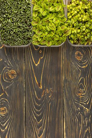 Three boxes with microgreens of sunflower, sorrel and Mizuna cabbage. 版權商用圖片
