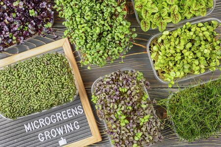 On a dark wooden  of boxes with micro greens vegetable