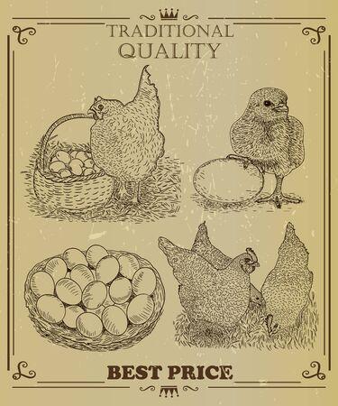 farm hand: Domesticated birds Vector set. Hen, Cock, Chicken. Chicken farm hand drawn illustration