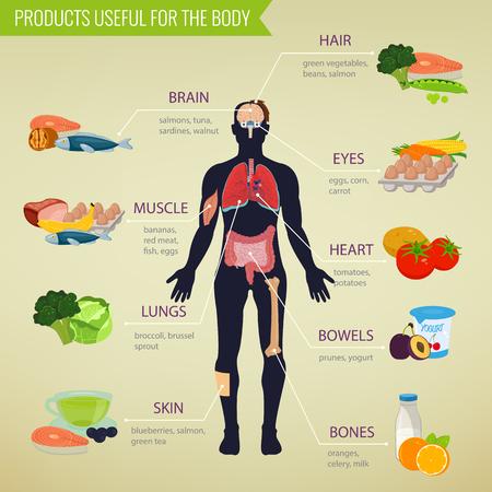 Une alimentation saine pour le corps humain. infographique de saine alimentation. Nourriture et boisson. Vector illustration