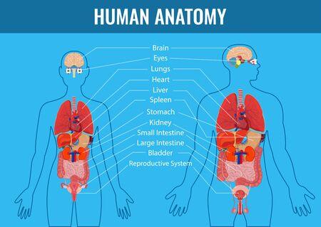 Human internal organs icons set. Human anatomy concept. Vector Illustration