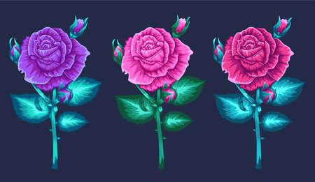 Blossom roses set. Floral design concept. Vector Ilustração