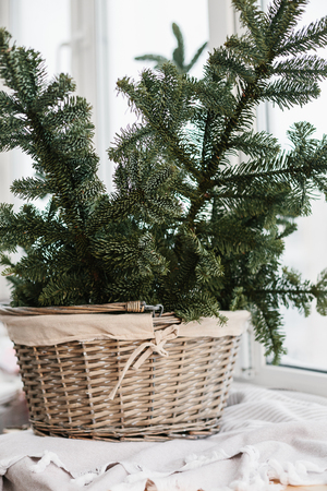 Spruce branches in basket. Rustic new year christmas decoration at home, scandinavian interior Stok Fotoğraf