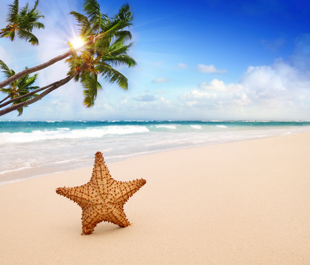 Beautiful landscape with Sea star on the beach.