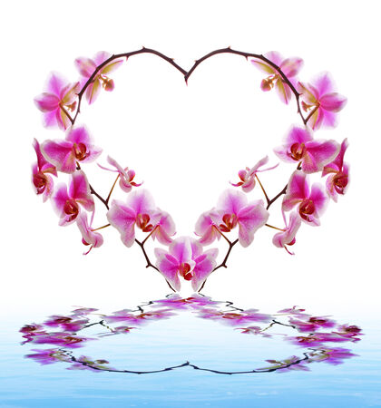 Orchid Flowers heart and water. photo