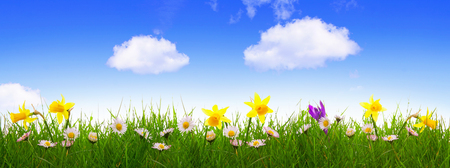 Green grass and colorful spring flowers. photo