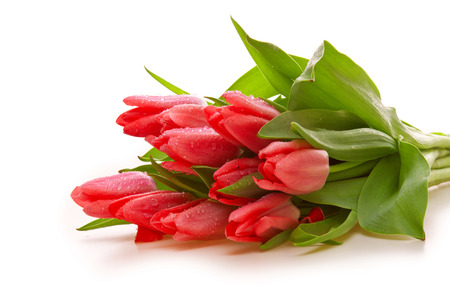 Pink tulips isolated on white background. 版權商用圖片