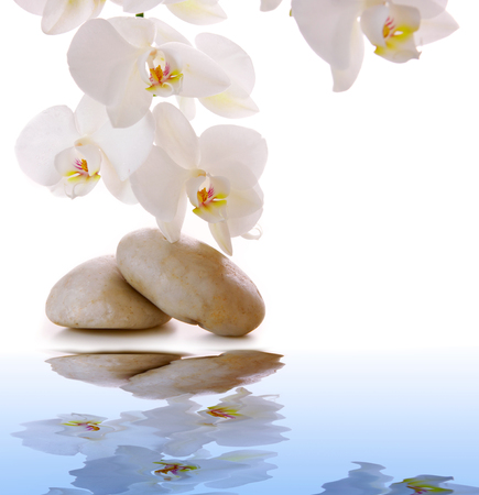 peace plan: White orchid isolated. Stock Photo