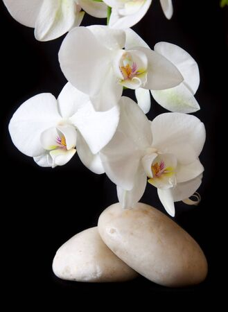 peace plan: Spa treatment massage stones, with white orchid. Stock Photo