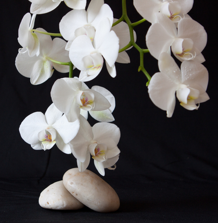 massage stones: Spa treatment massage stones, with white orchid. Stock Photo