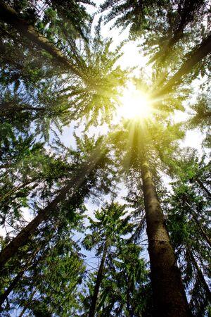 glows: Sun glows through the dense forest