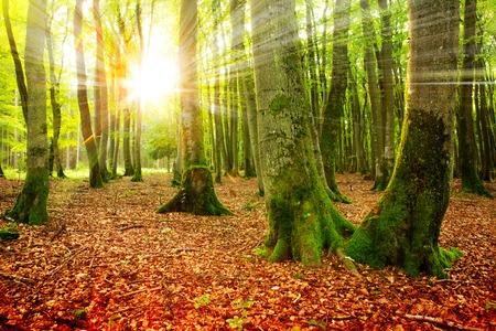 Sunset in the autumn forest. Autumn landscape .
