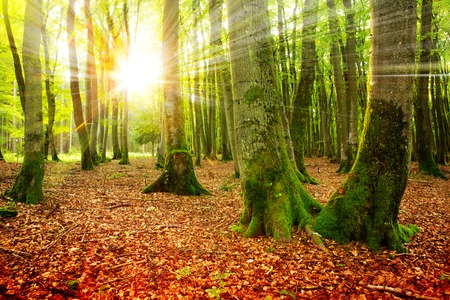 fall beauty: Sunset in the autumn forest. Autumn landscape .