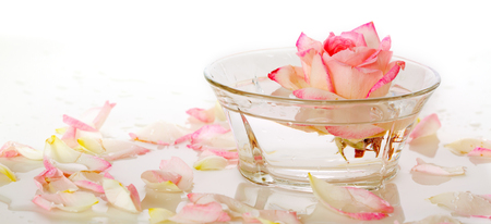 water on leaf: Infused water with rose petals in a reflection White Rose in a bowl of water and  petals. Stock Photo