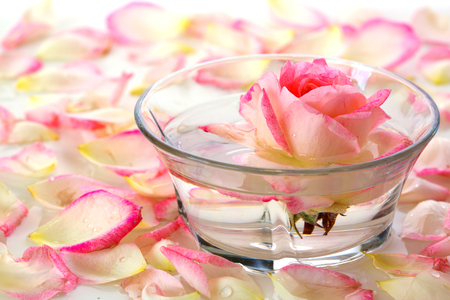 Infused water with rose petals in a reflection White Rose in a bowl of water and  petals. 版權商用圖片