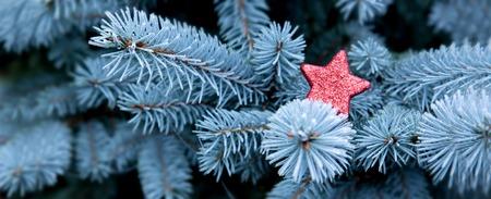 estrellas de navidad: Ramas de pino azul y fondo rojo de invierno de Navidad star.Christmas.