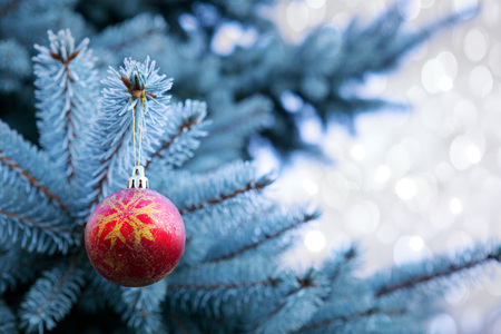 pine tree needles: Blue Pine branches and red Christmas ball.Christmas winter background.