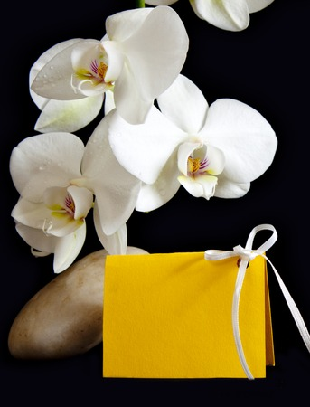 white orchid: Beautiful branch white orchid flowers with spa stones .
