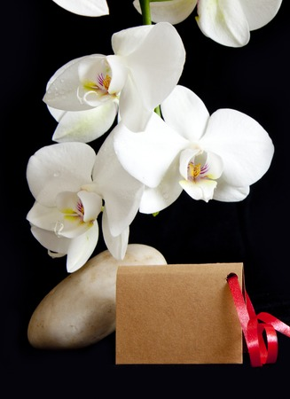 spa stones: Beautiful branch white orchid flowers with spa stones .