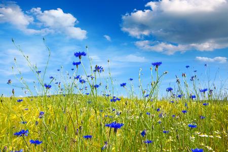 夏花のフィールドと曇りの風景。花 meadof と青空とカラフルな風景。