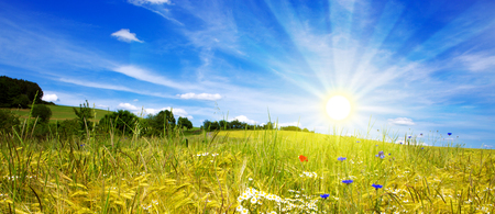 Summer landscape with flowers field . Colorful landscape with flower meadof and blue sky.