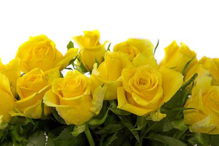 Bouquet de roses jaunes isolé sur fond blanc. Banque d'images - 56113378