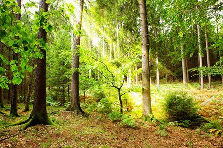 Sonnenuntergang im Herbstwald. Herbstlandschaft.