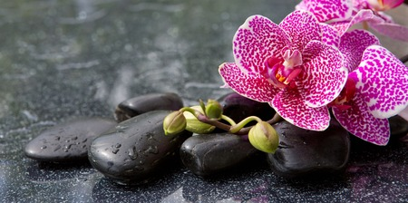 black stones: Pink orchid isolated on black background.Branch of pink orchids on a black background.