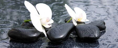 spa flower: White orchid flowers and stone with water drops isolated on black background.