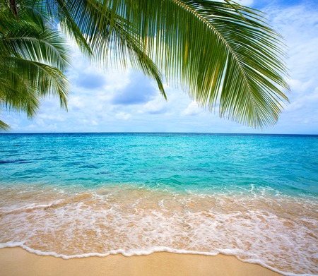 sommer: Beautiful caribbean sea and green palm leaves . Sommer ocean landscape as background.