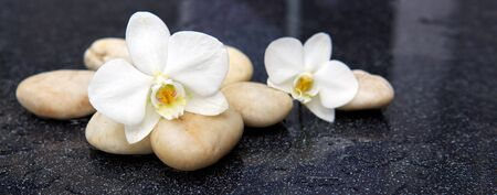 White orchid flowers and stone with water drops isolated on black background.
