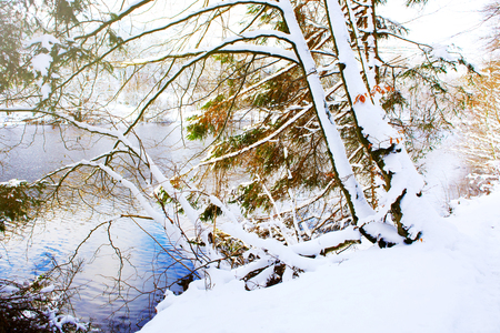 frozen winter: Frosty trees in the winter scenery . Winter landscape of frozen trees and lake.