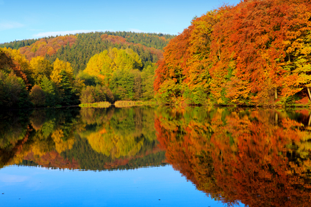 reflect: Autumn yellow trees reflection in a lake on a sunny day. Autumnal trees reflection in the lake water.