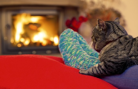 Feet in wool socks by the fireplace. Woman relaxes by warm fire and warming her feet in wool sock. Female legs in socks and gray cat on the background of a burning fireplace.