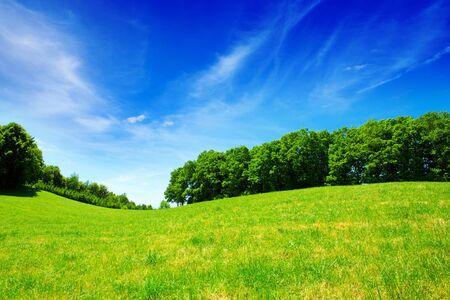 Champ vert et ciel bleu avec des nuages ??légers. Champ, arbres et ciel bleu.