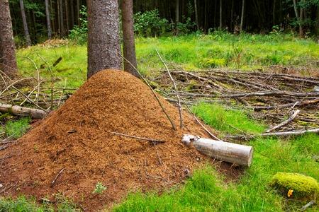 Ant hill in european forest. Reklamní fotografie
