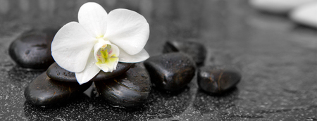 White orchid flower and stone with water drops isolated on black background.