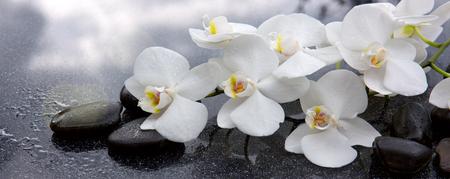 White orchid and black stones close up. Archivio Fotografico