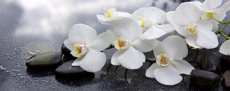 White orchid and black stones close up. Stock Photo