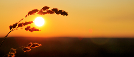 Wild grass in nature on a sunset background. 版權商用圖片